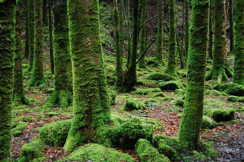 Fotobanka sbezplatnými fotkami na tému dažďový prales, les, lesy, mach