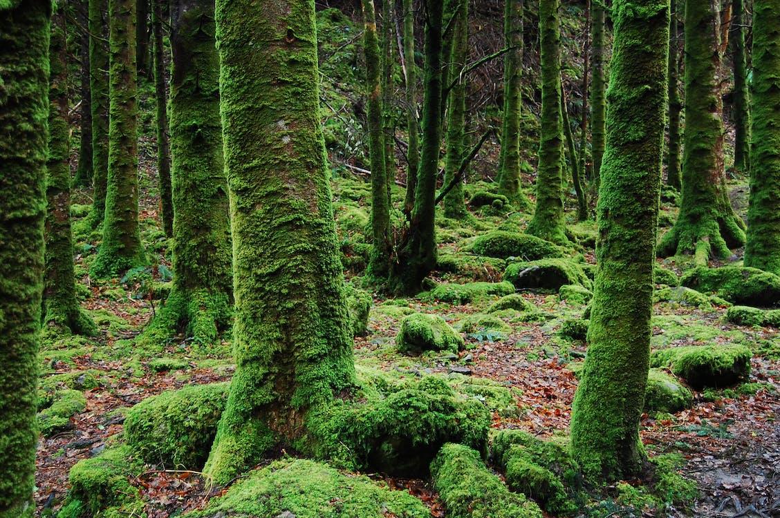 деревья, зеленый, лес