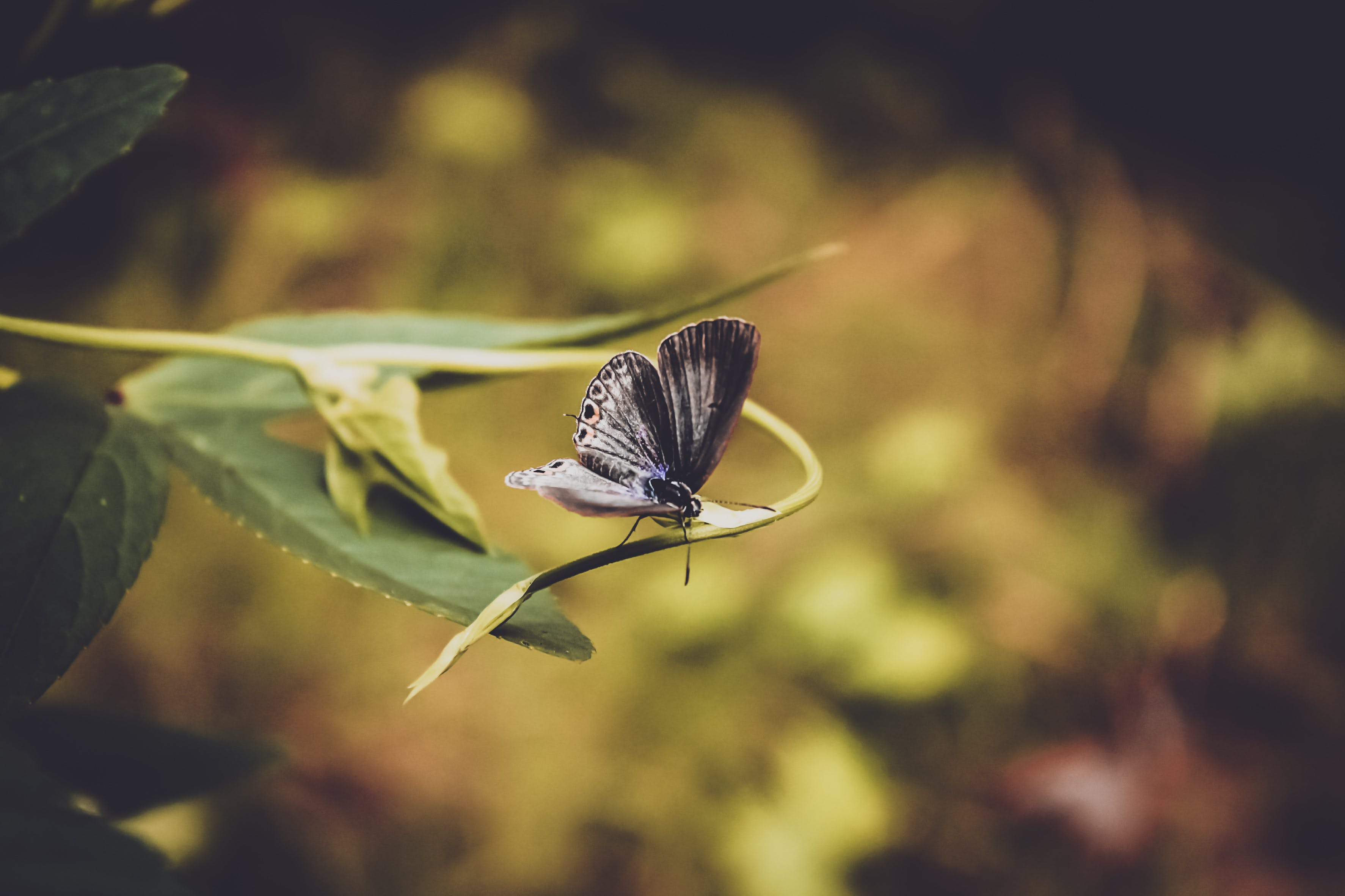 Black Butterfly Perching on Flower