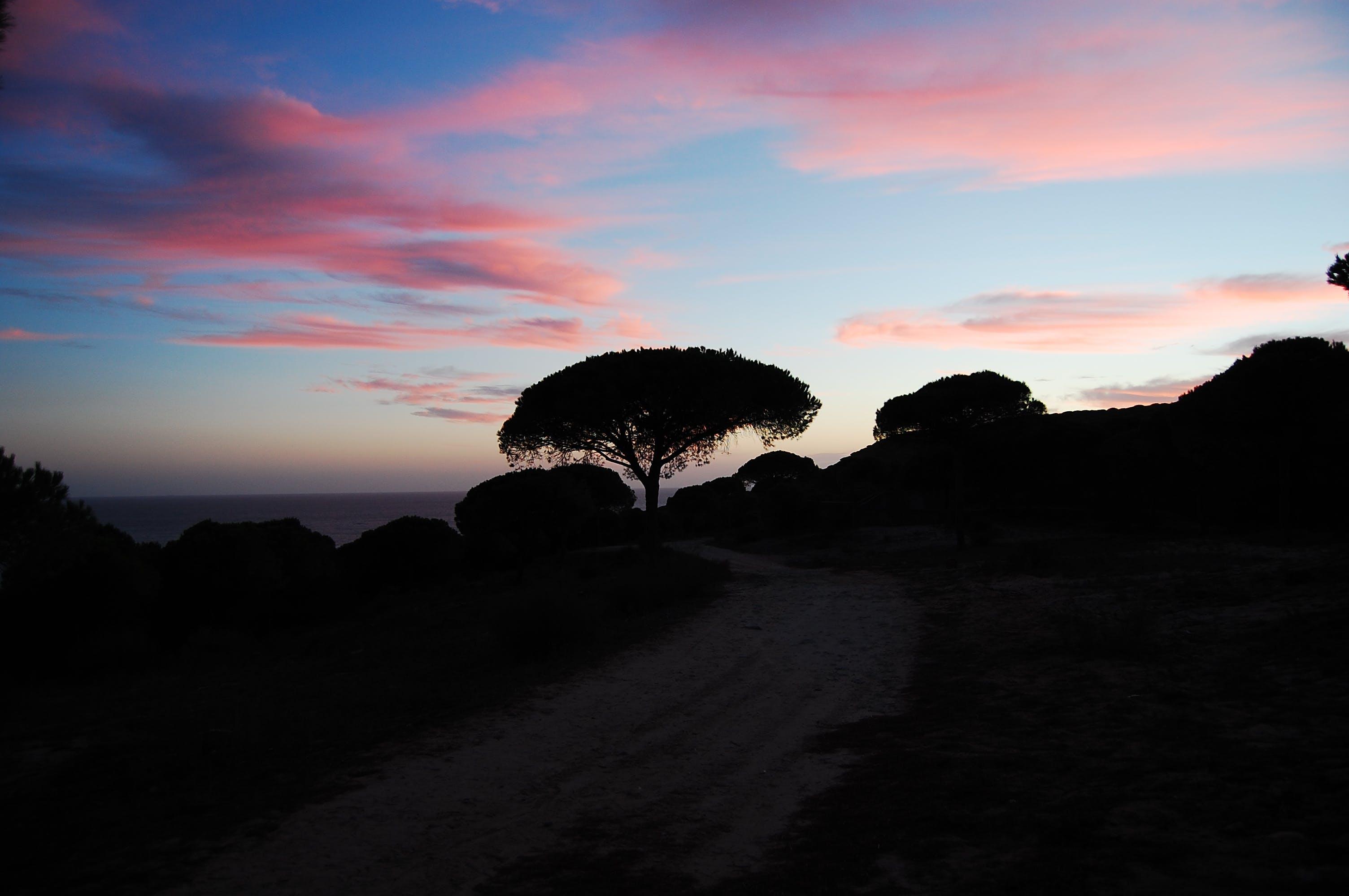 Free stock photo of lila, sunset