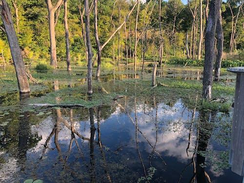 Бесплатное стоковое фото с болото