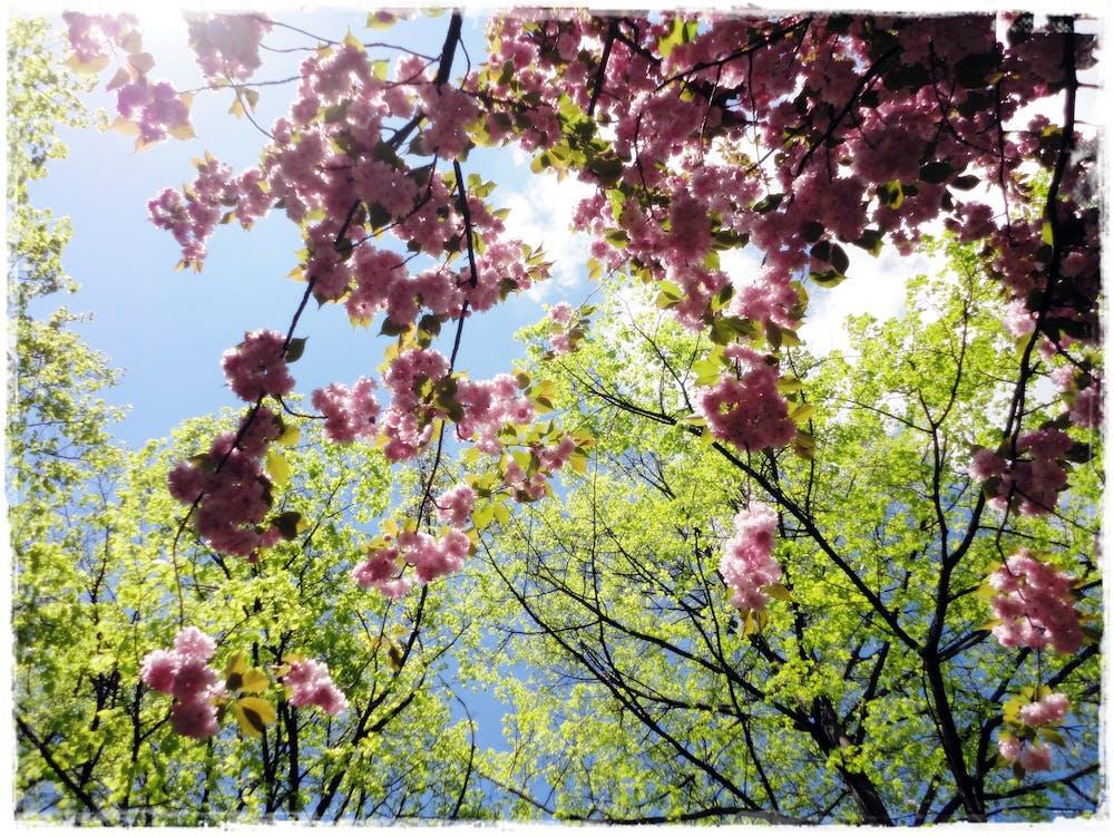 Free stock photo of flower, sky, sun