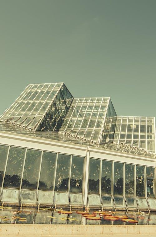 Gratis lagerfoto af arkitektonisk, drivhus, vinkler