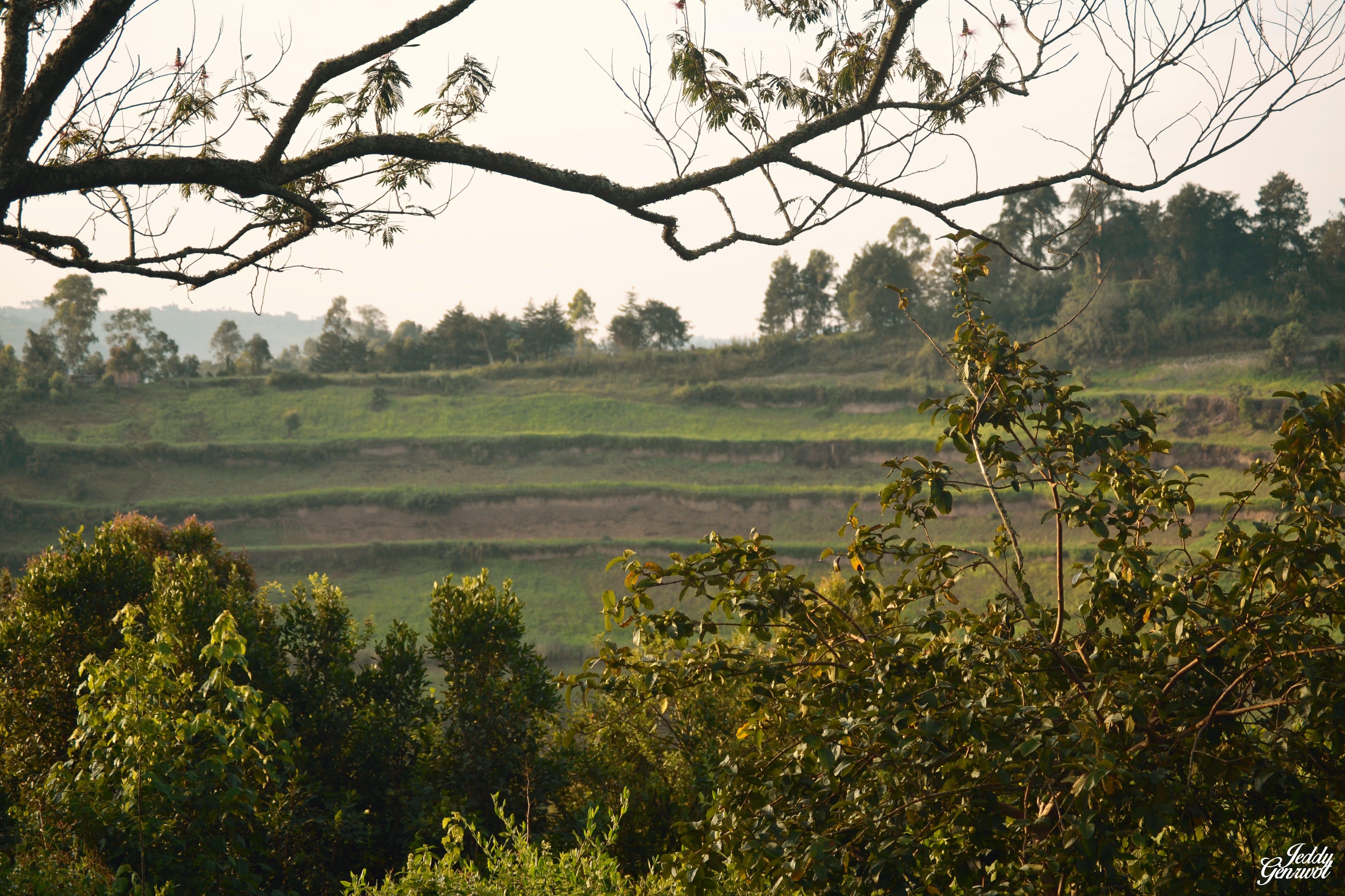 Free stock photo of Bunyonyi, landscape, nature, Wakanda