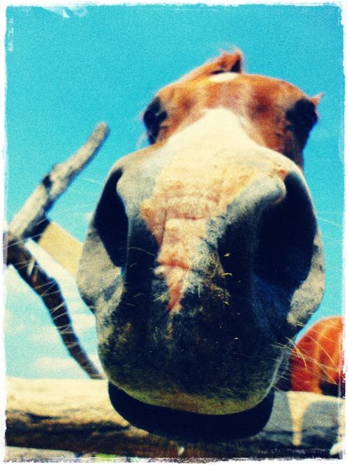 Free stock photo of animal, cute, horse