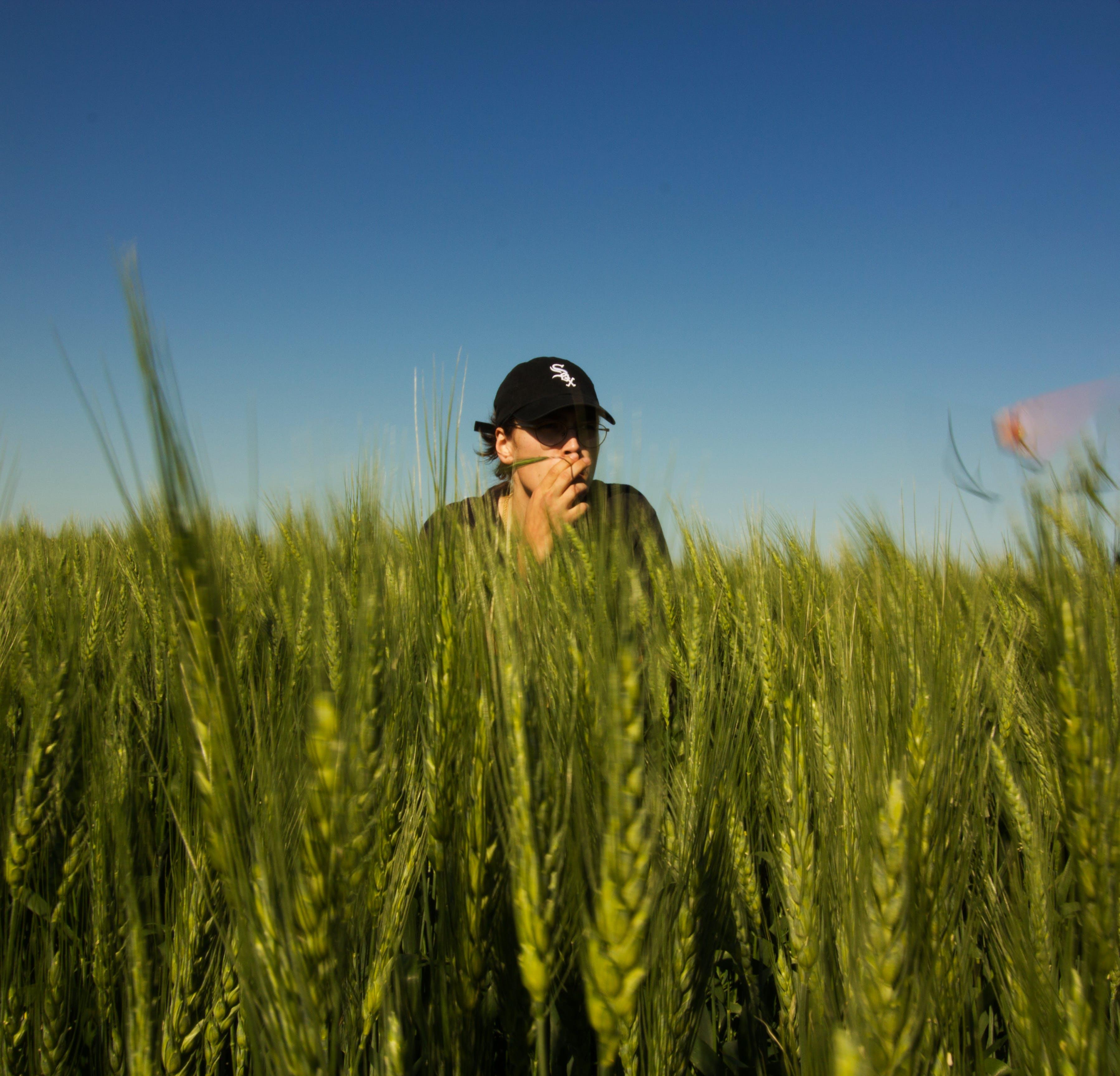 Gratis lagerfoto af afgrøder, agerjord, bane, blå himmel