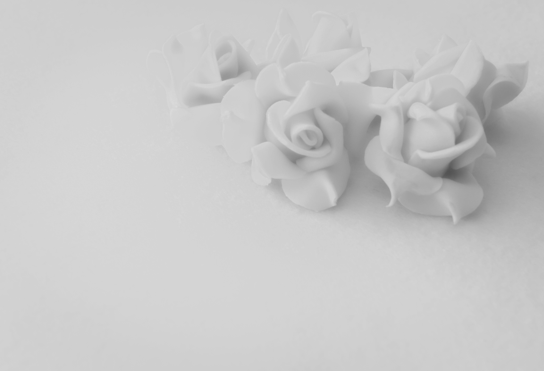 background, flowers, garden