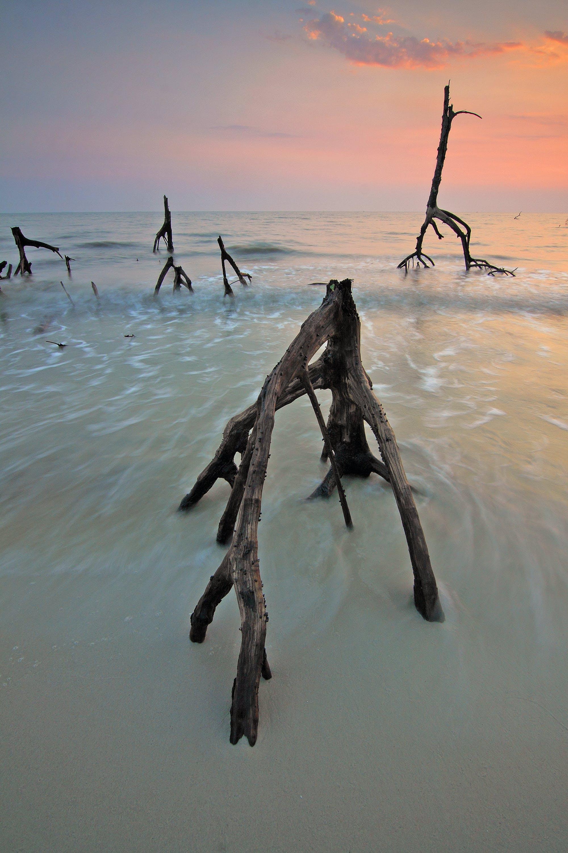 Základová fotografie zdarma na téma kmeny stromů, mávání, moře, mraky