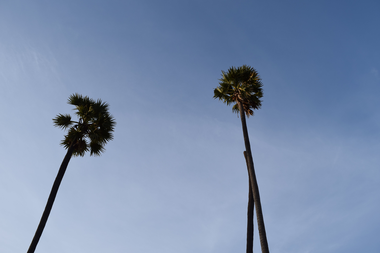 india, tree