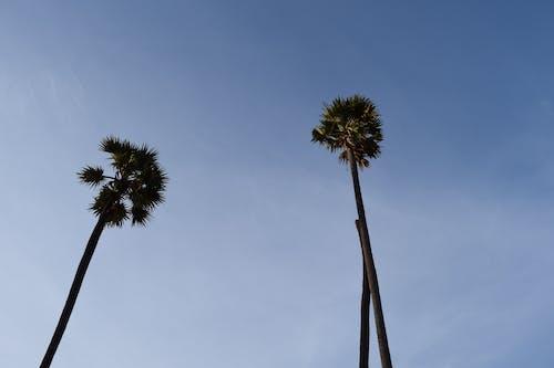 Free stock photo of india, tree