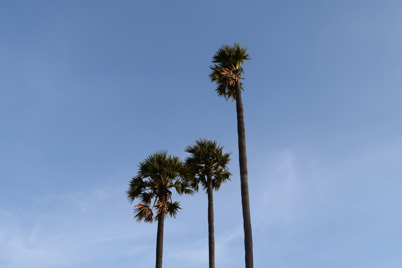 Free stock photo of india, trees