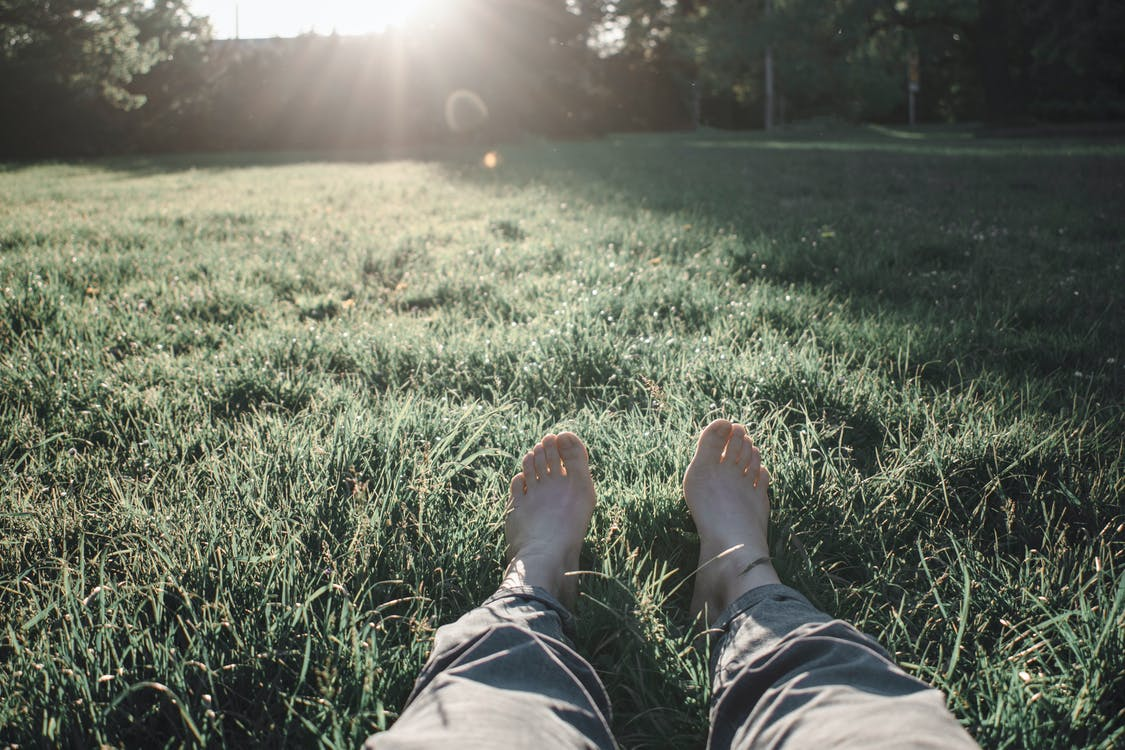 กลางวัน, การผ่อนคลาย, ทุ่งหญ้า
