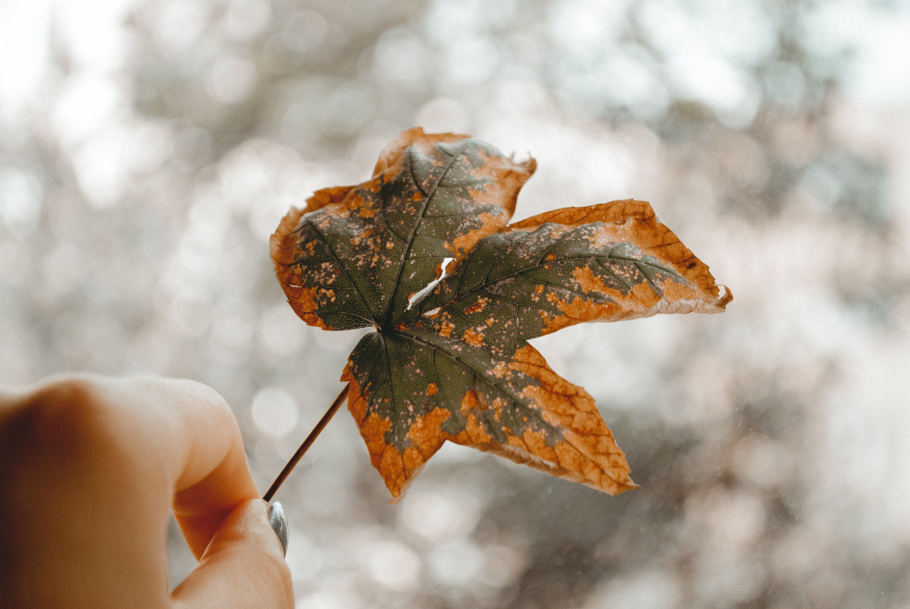 Close-Up Photography of Person Holding Autumn Leaf