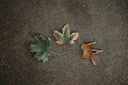 간, 건조한, 나뭇잎, 녹색의 무료 스톡 사진
