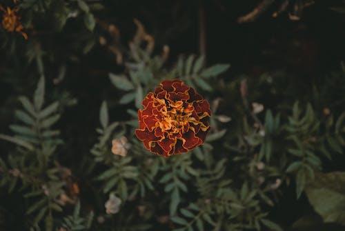 Δωρεάν στοκ φωτογραφιών με γκρο πλαν, θολό παρασκήνιο, λουλούδι, πέταλα