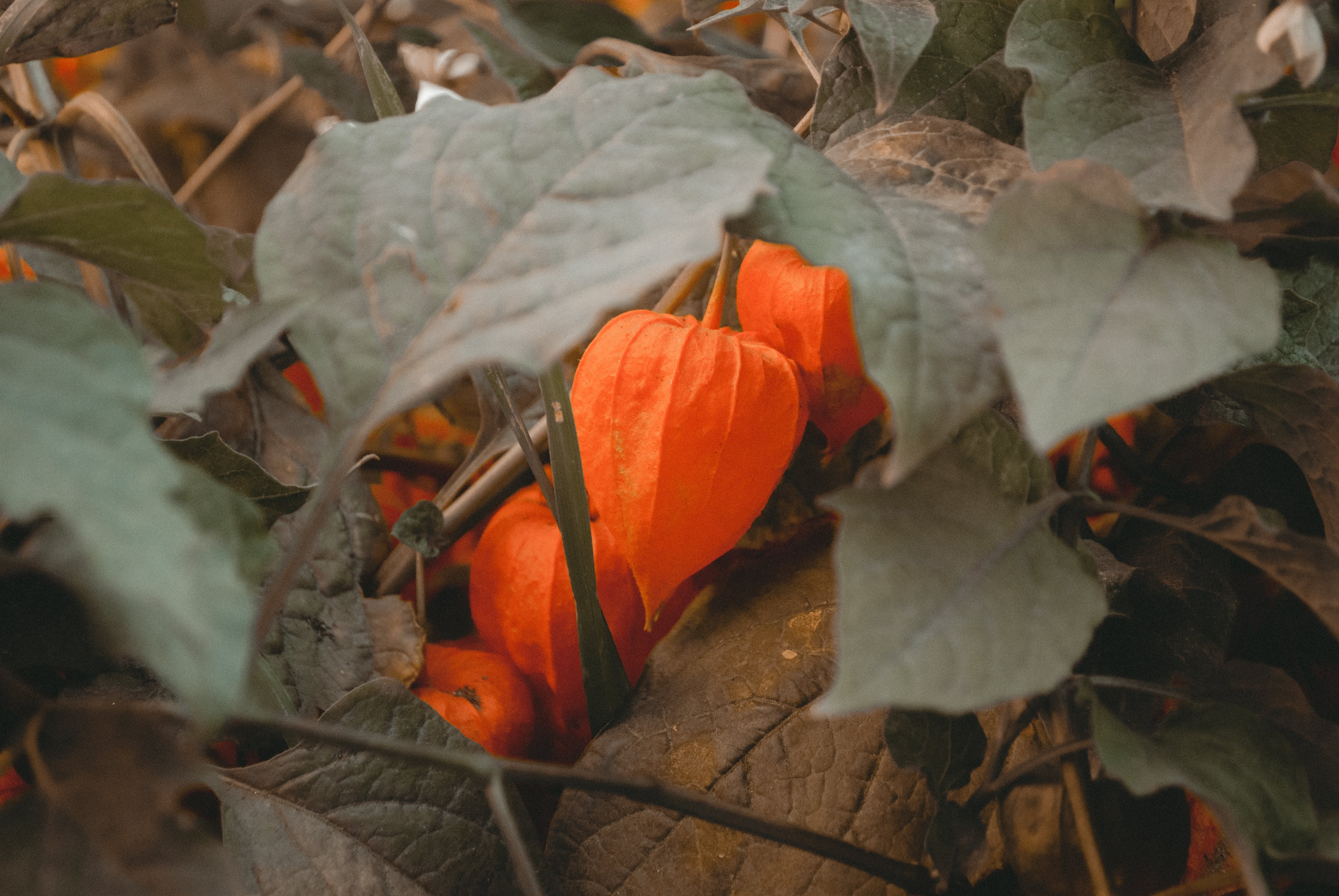 Close-up Photo of Orange Petaled Flowers