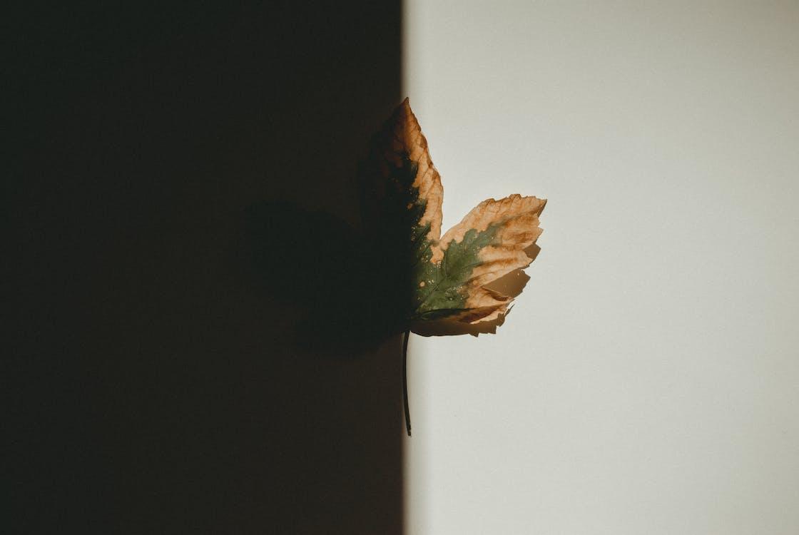 в помещении, снимок крупным планом, сухой лист