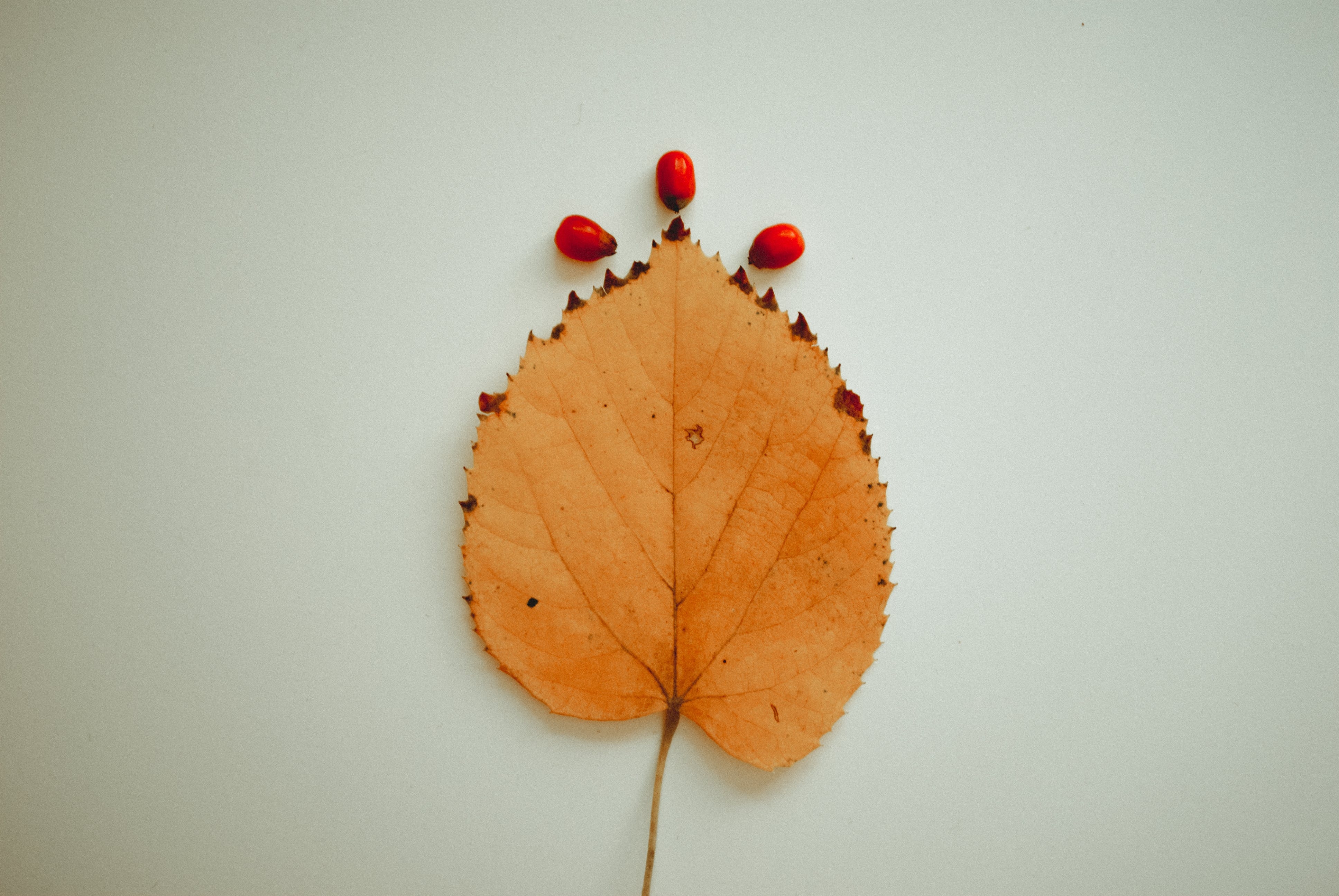 Beige Leaf and Three Red Fruits on White Surface