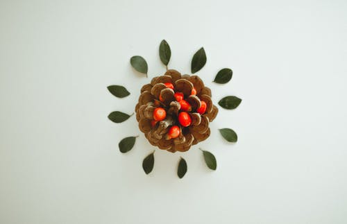 Brown Pinecone