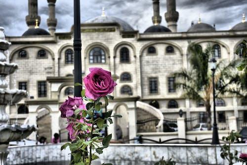 Fotos de stock gratuitas de #arquitectura #rose #pink #colour #pinkrose