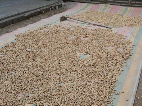 Kostenloses Stock Foto zu erdnüsse