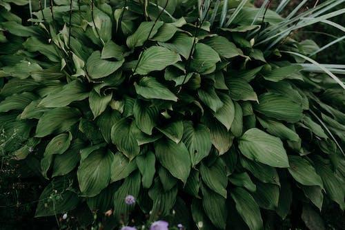 Kostenloses Stock Foto zu blumen, flora, garten, grasfläche