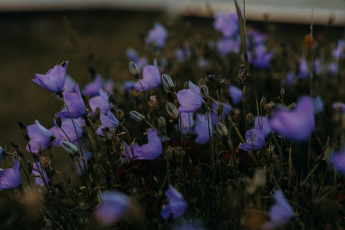 Selective Focus Photo of Purple Petaled Flowers