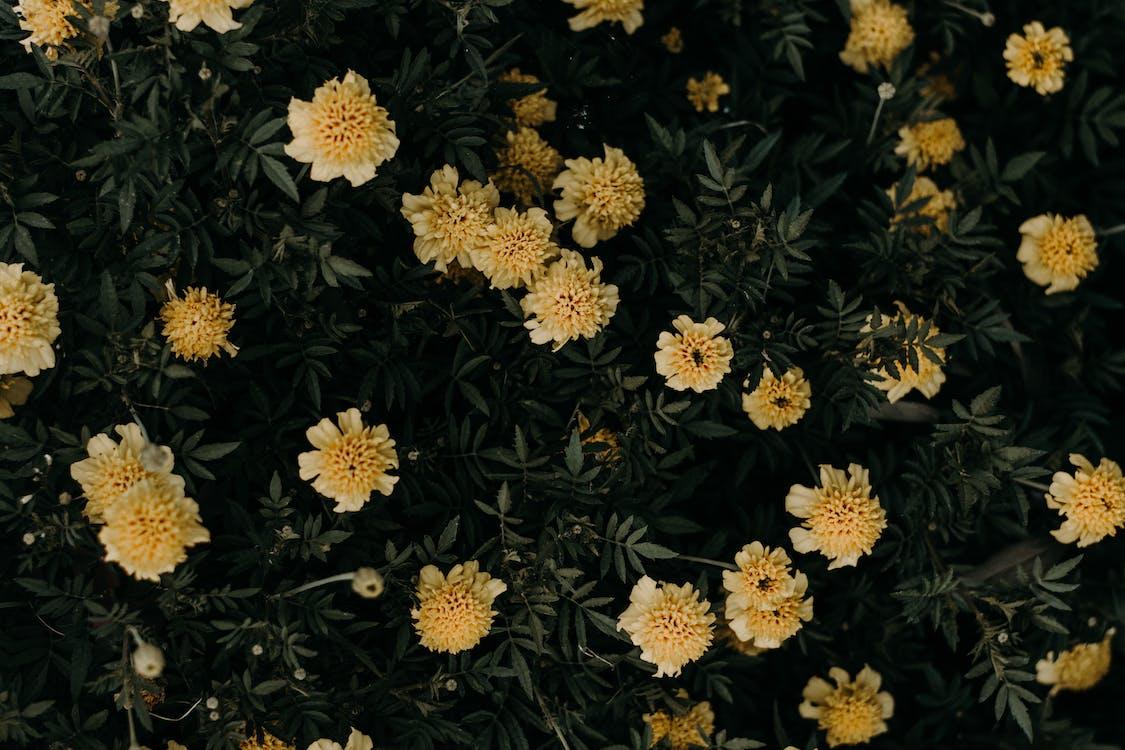 flora, jasny, kolory