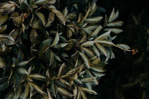 Fotos de stock gratuitas de colores, plantas, primer plano, verde