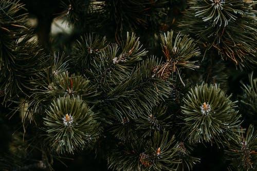 Closeup Photo of Pine Tree