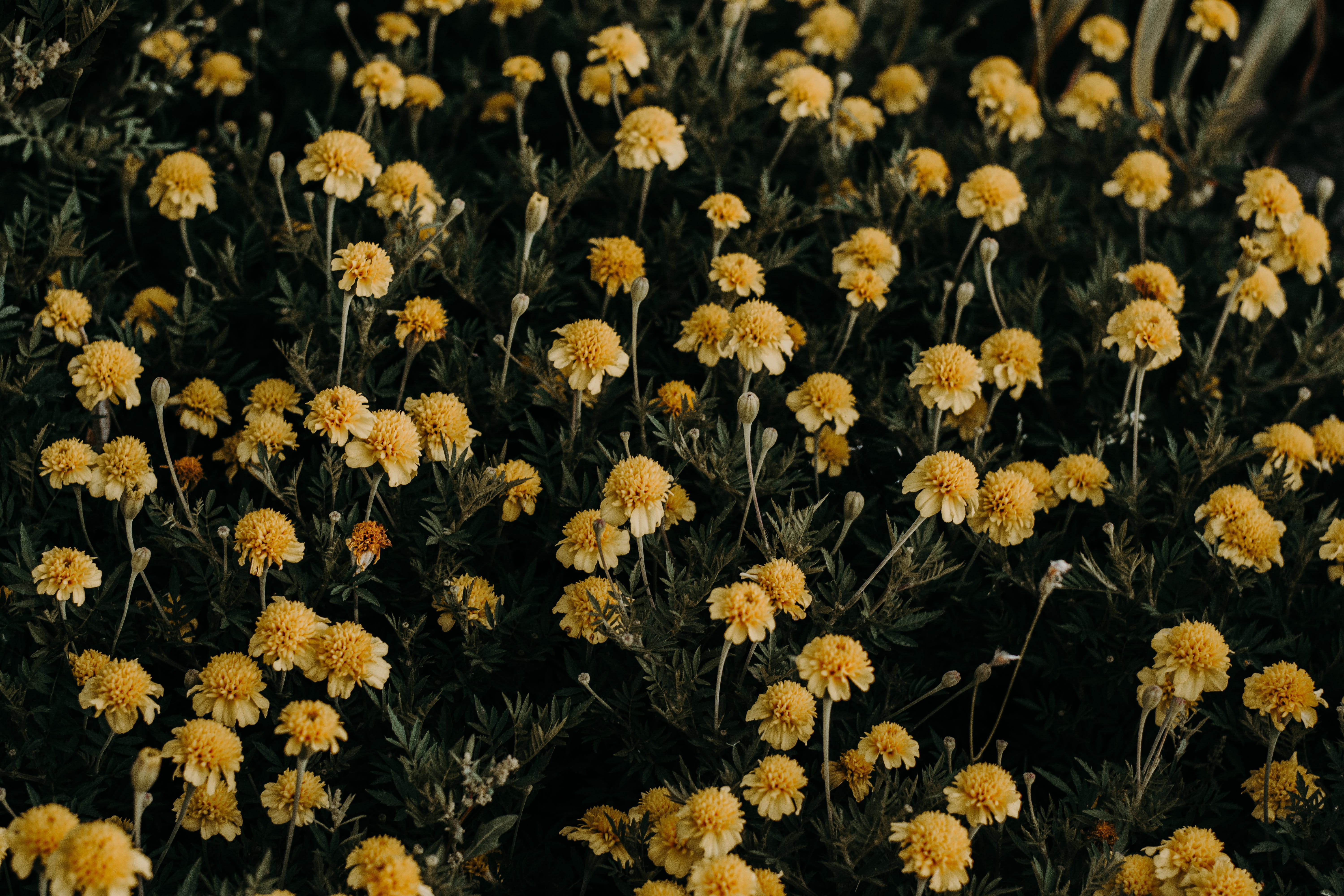 Close-Up Photography of Yellow Flowers