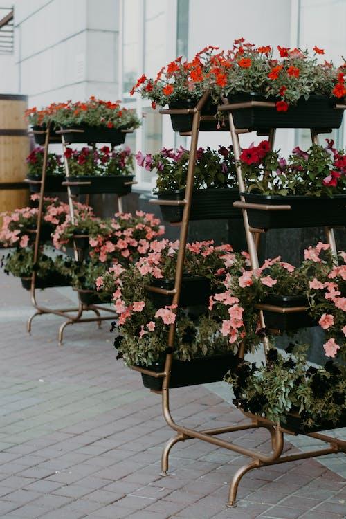 anlegg, blomster, blomsterpotte