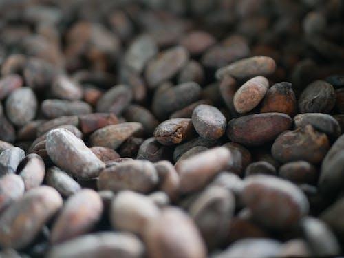 Kostenloses Stock Foto zu fabrik, kakao, roh, schokolade