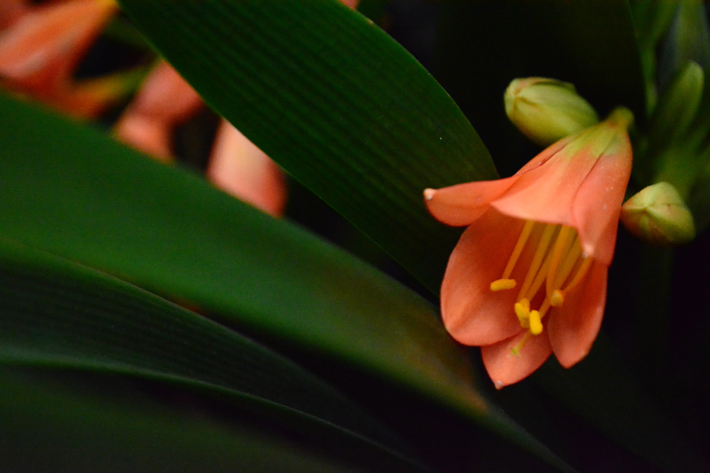 Free stock photo of beautiful flowers, flower, fresh flowers
