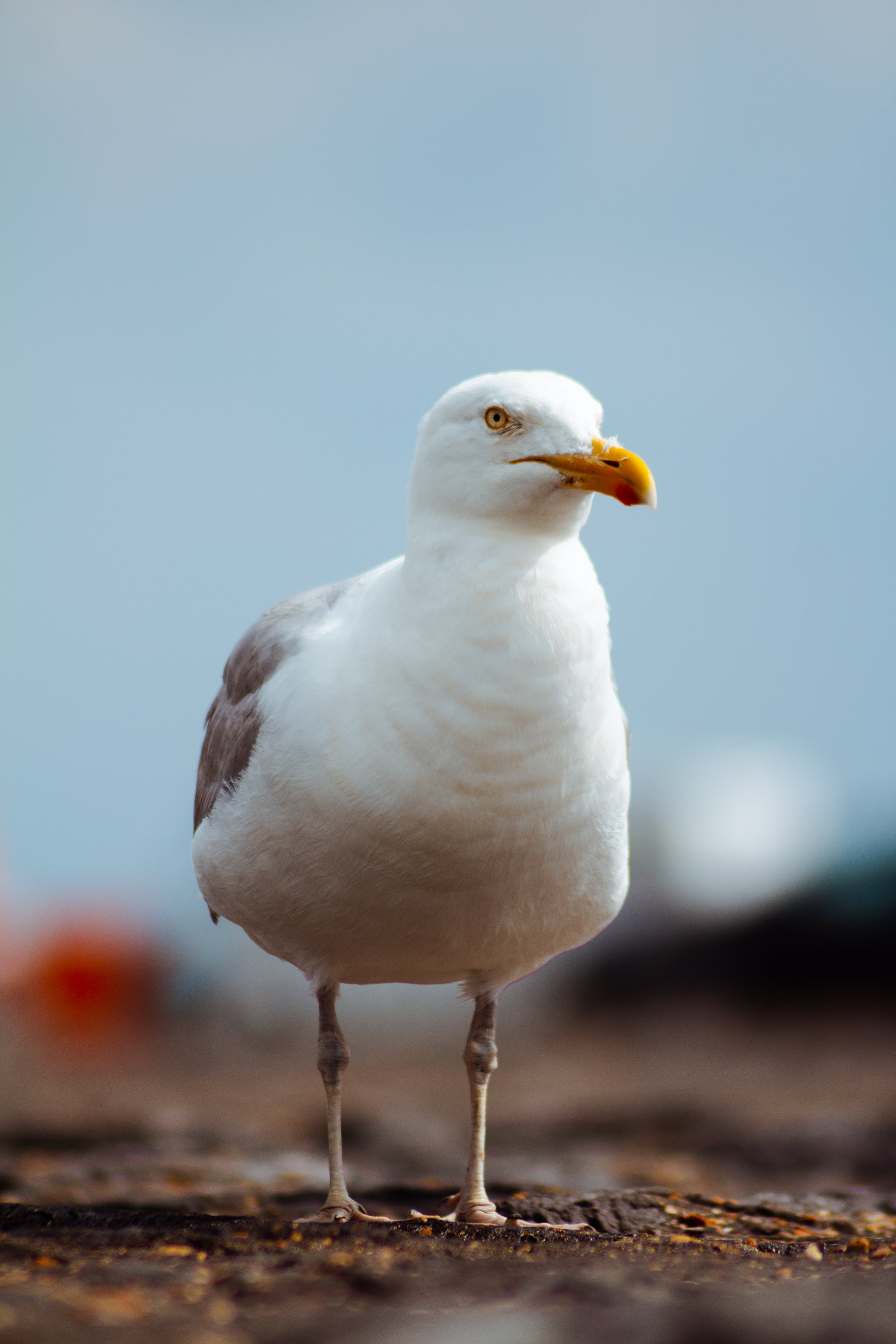 Free stock photo of animal, bird, birds, feathers