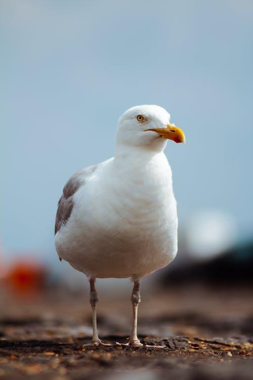 seevogel, staredown, 깃털