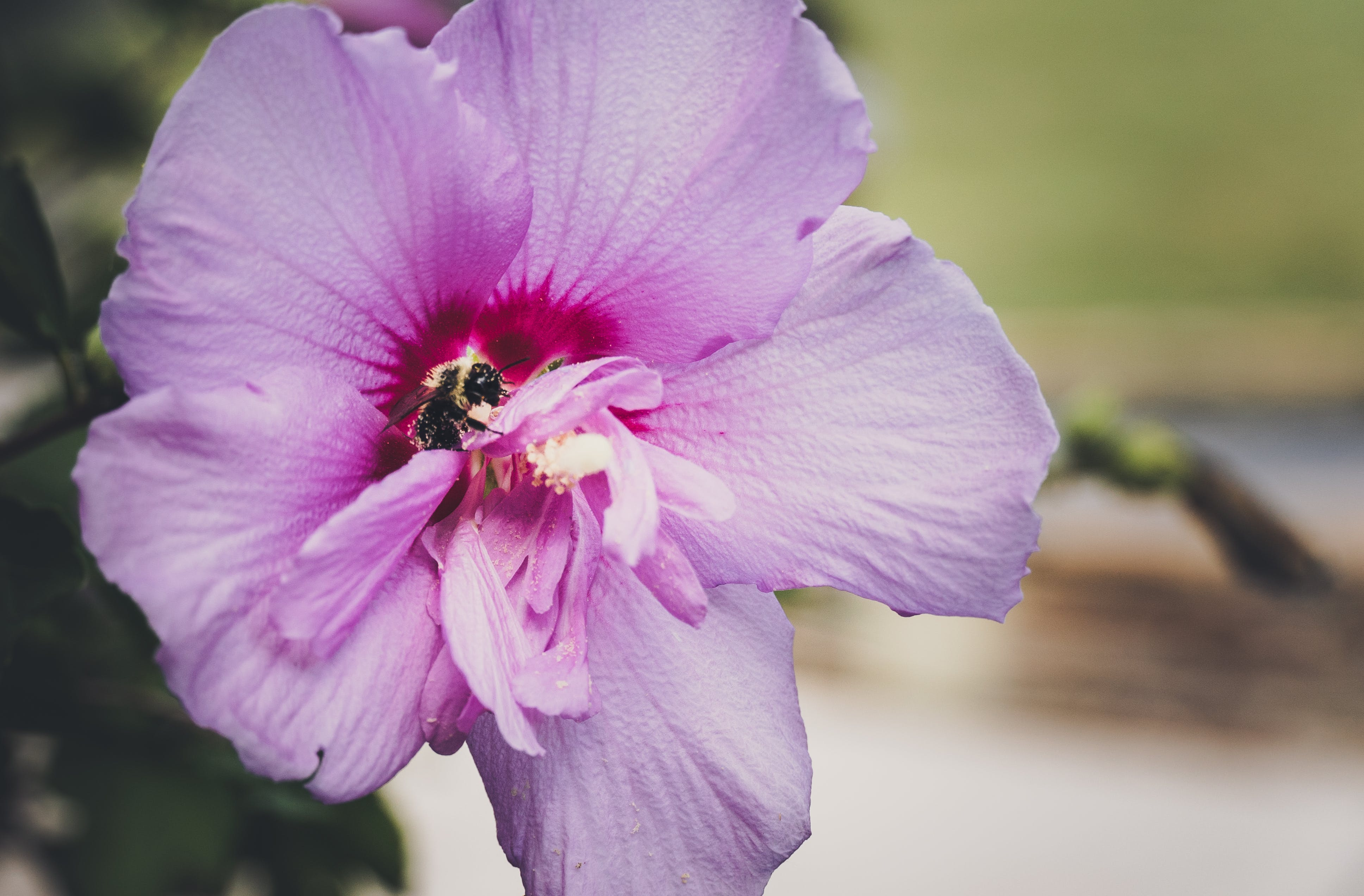 Free stock photo of beautiful, bee, flower, green