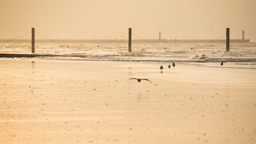 かもめ, ベルギー, 水, 海の無料の写真素材