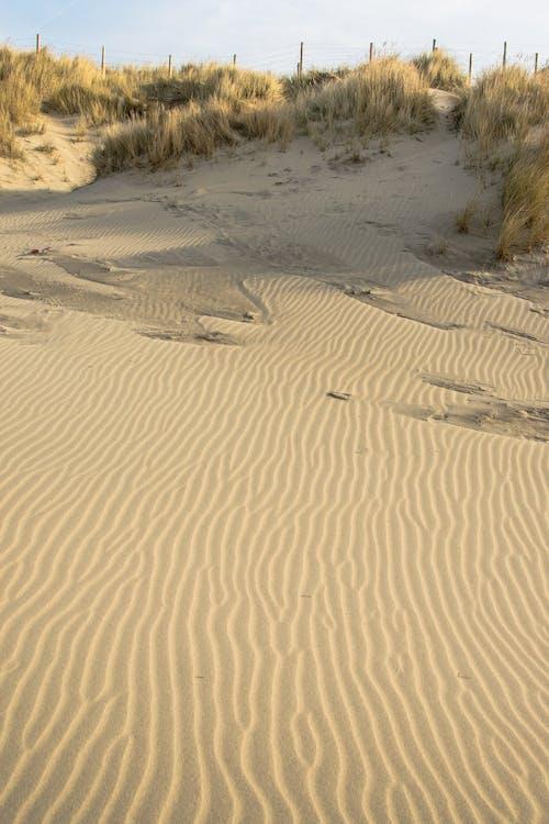 ビーチ, ベルギー, 砂, 砂丘の無料の写真素材