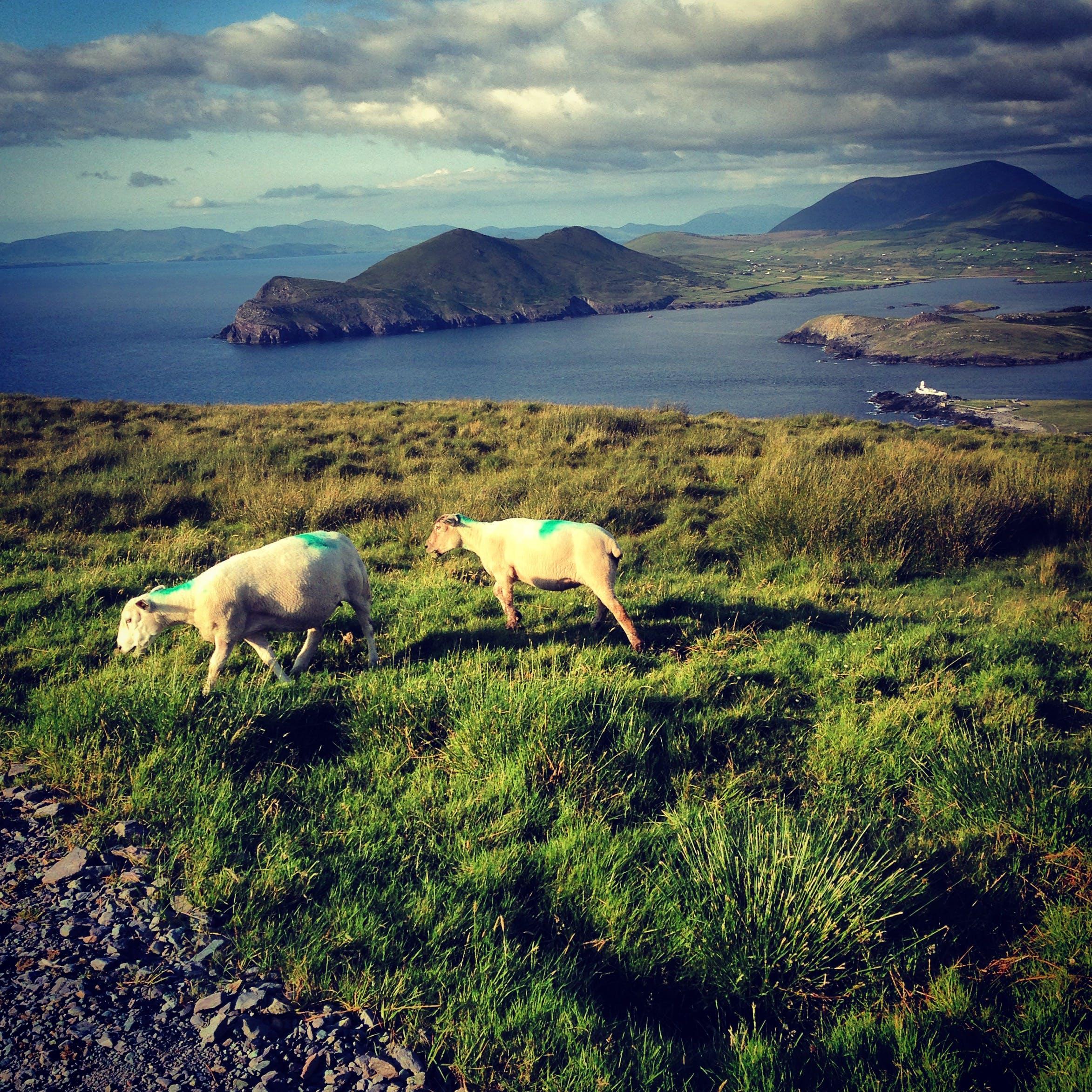 Kostenloses Stock Foto zu berg, irland, kerry, landschaft
