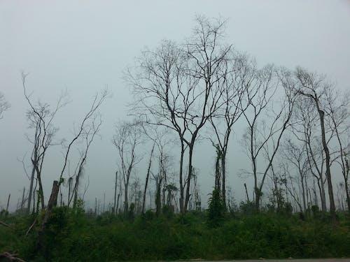 Foto d'estoc gratuïta de arbres, baguls, boscos, branques