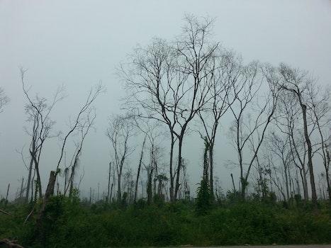 Kostenloses Stock Foto zu landschaft, himmel, badehose, bäume