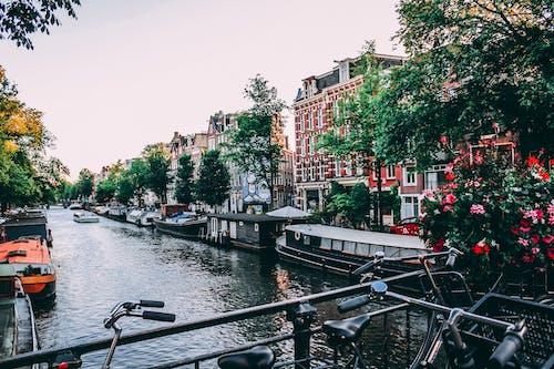 Imagine de stoc gratuită din ambarcațiuni, Amsterdam, apă, arbori