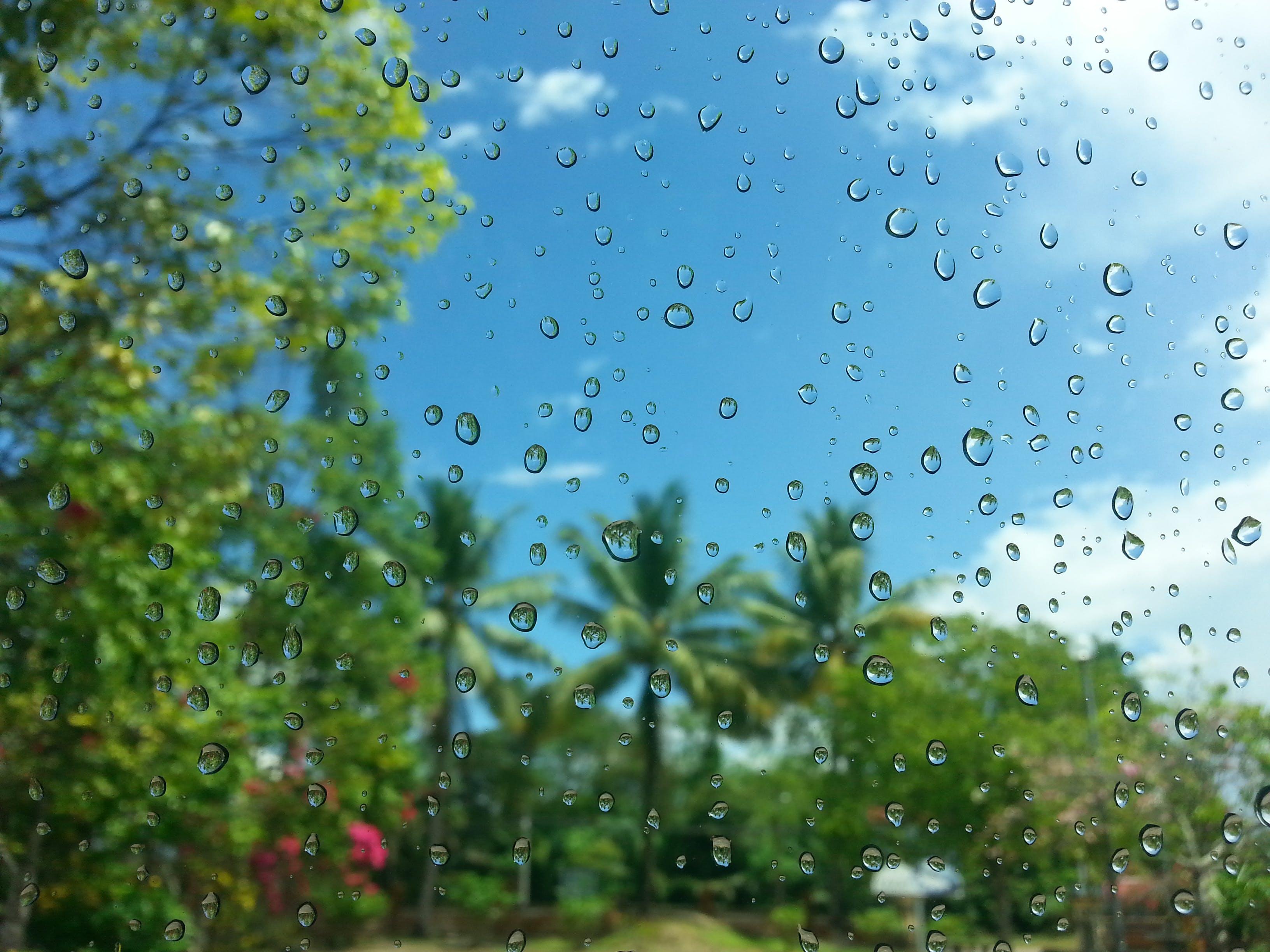 Immagine gratuita di alberi, bagnato, bicchiere, bolla