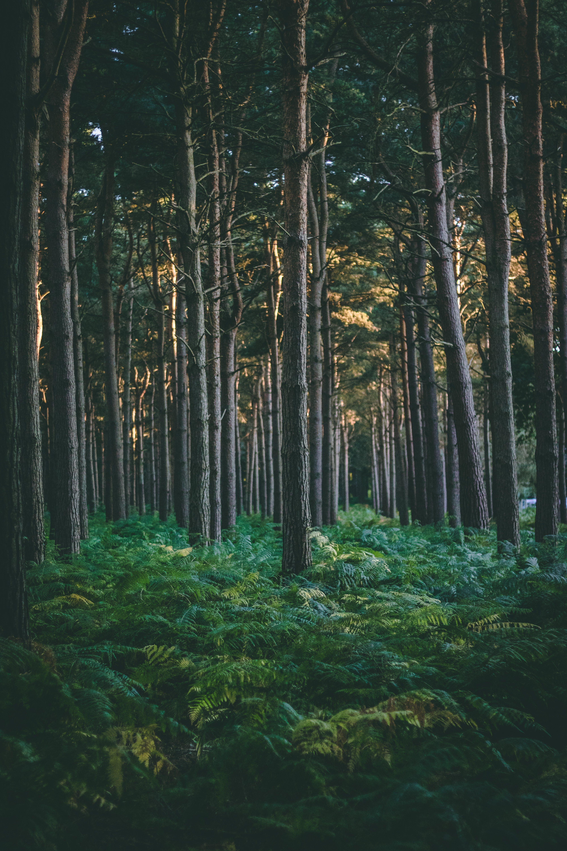 Бесплатное стоковое фото с вечнозеленый, деревья, дневной свет, живописный