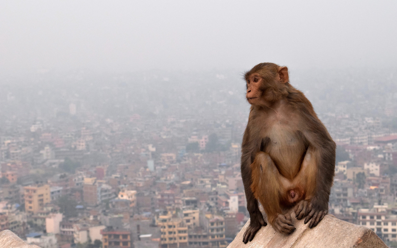 Free stock photo of alone, baby monkey, big city, blur