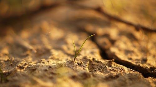 Foto profissional grátis de ao ar livre, areia, chão, close