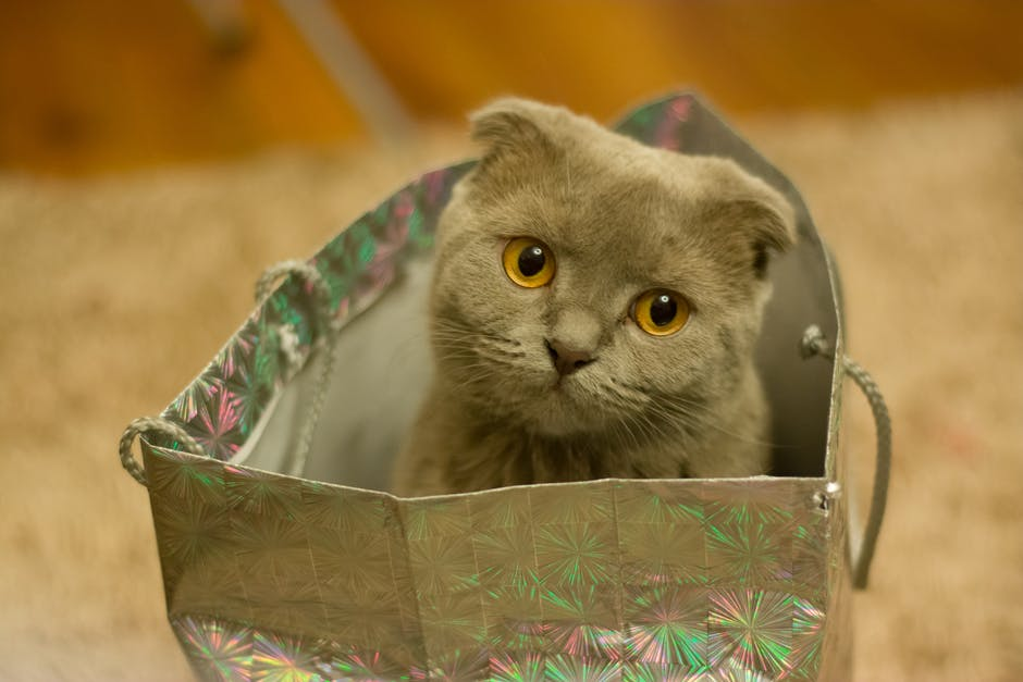 Grey Kitten on Silver Paper Bag