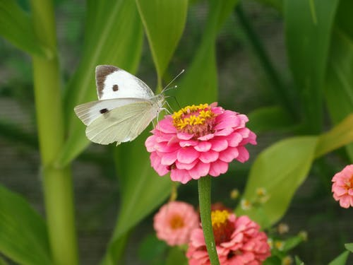 Free stock photo of butterfly, flower, green