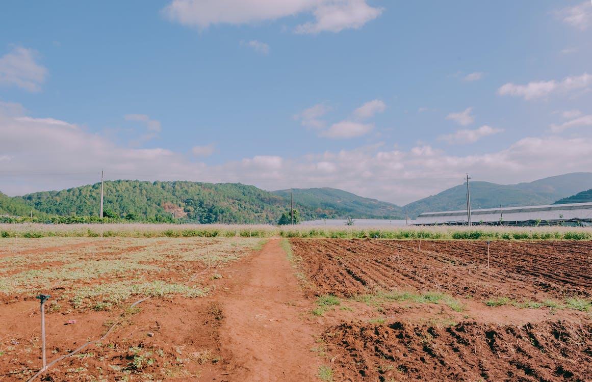 dzień, gleba, góry